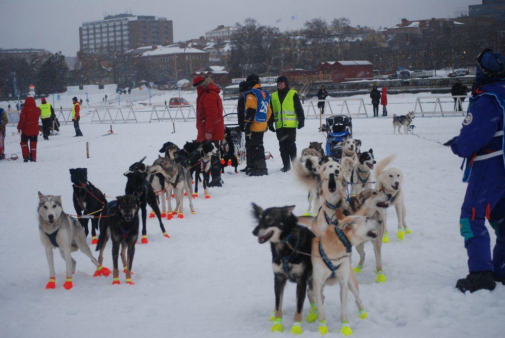 Course de chiens de traineau de longue distance entre Ostersund et Roros entre Suède et Norvège