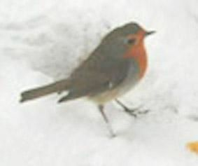Album - jardin-sous-la-neige