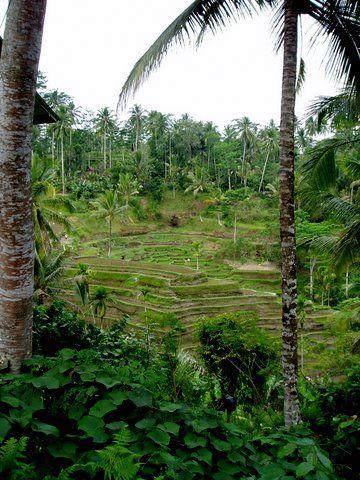 Mon repérage à Bali