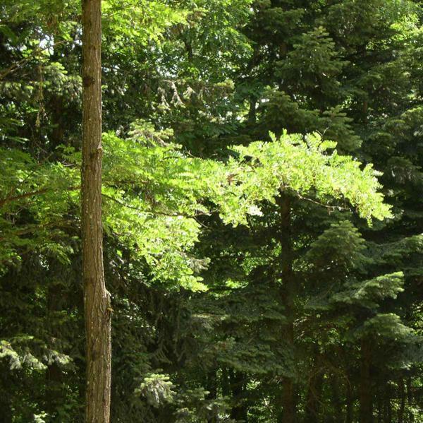 Album - forêts