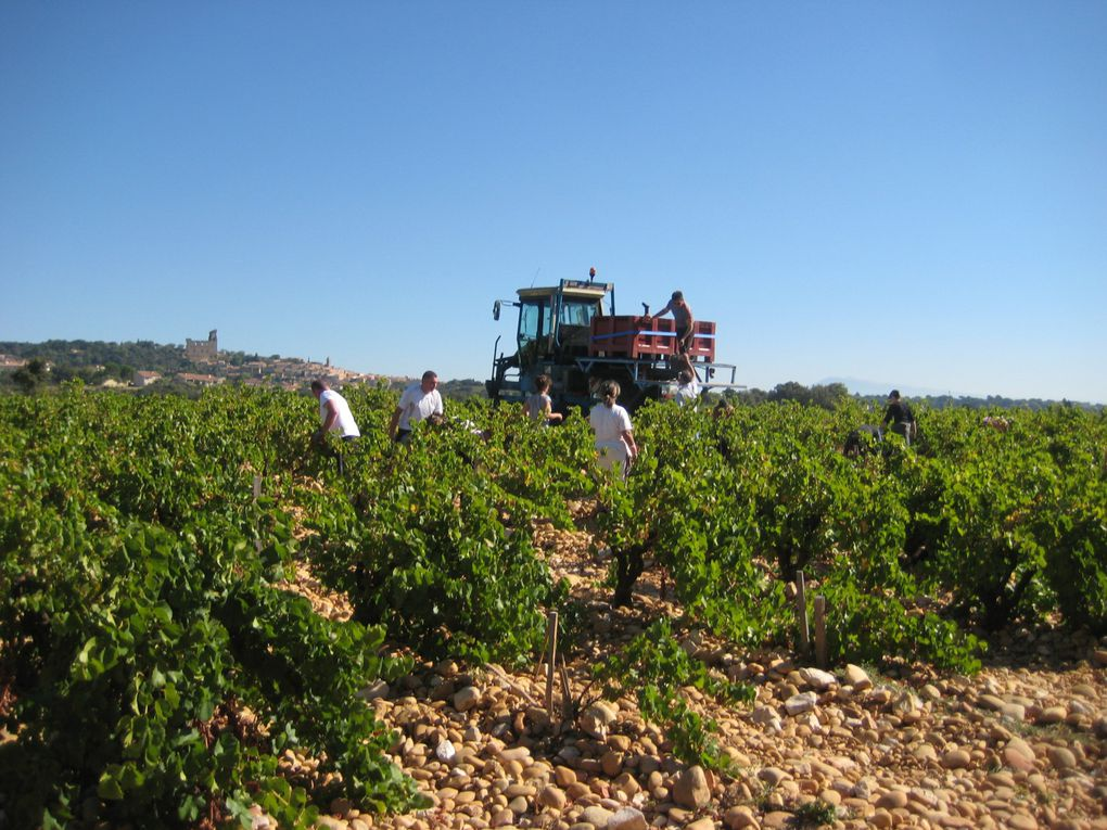 Album - VENDANGES - 2010