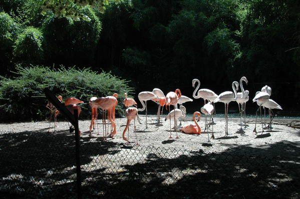Album - Zoo-de-Mulhouse