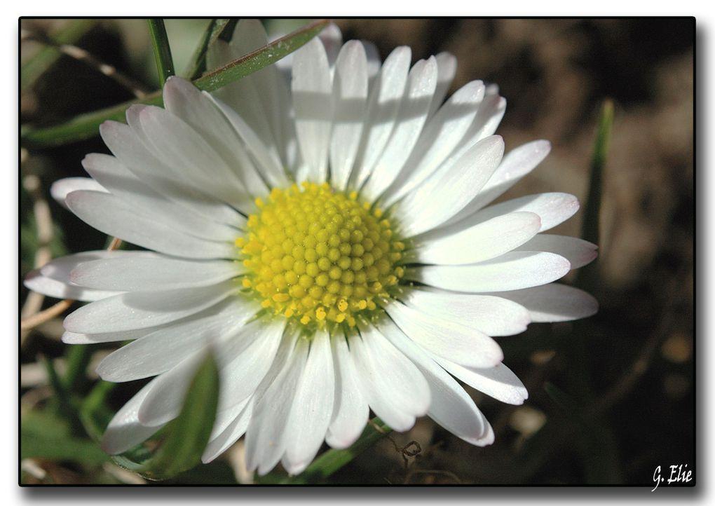 """<span style=""""font-style: italic&#x3B;"""">Photos de fleurs de mon jardin, et glané dans d'autres jardins bien sur....</span><br style=""""font-style: italic&#x3B;"""" /><span style=""""font-style: italic&#x3B;"""">merci a ceux qui me laisse entrer dans le leur...</span>"""