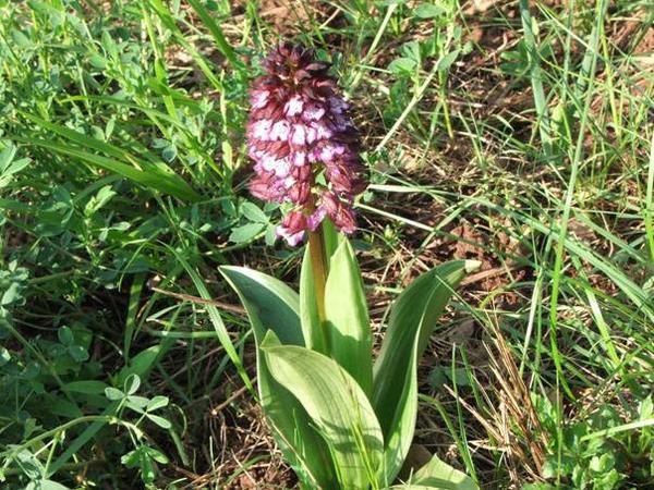 <p><em>fleurs sauvages des environs de Courtilles </em></p><p><em>photos de JACQUES ET LOIC MOULS</em></p>