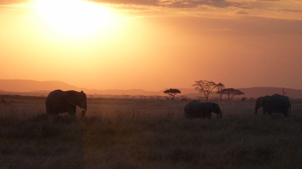 Album - Kilimandjaro  Juillet 2013