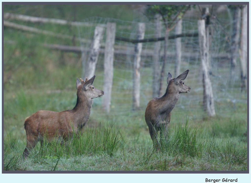 Photos de la faune de nos forets d'Alsace.&nbsp&#x3B;
