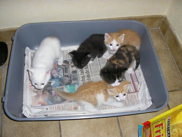 Notre petit cat' né le 27 février à Millau