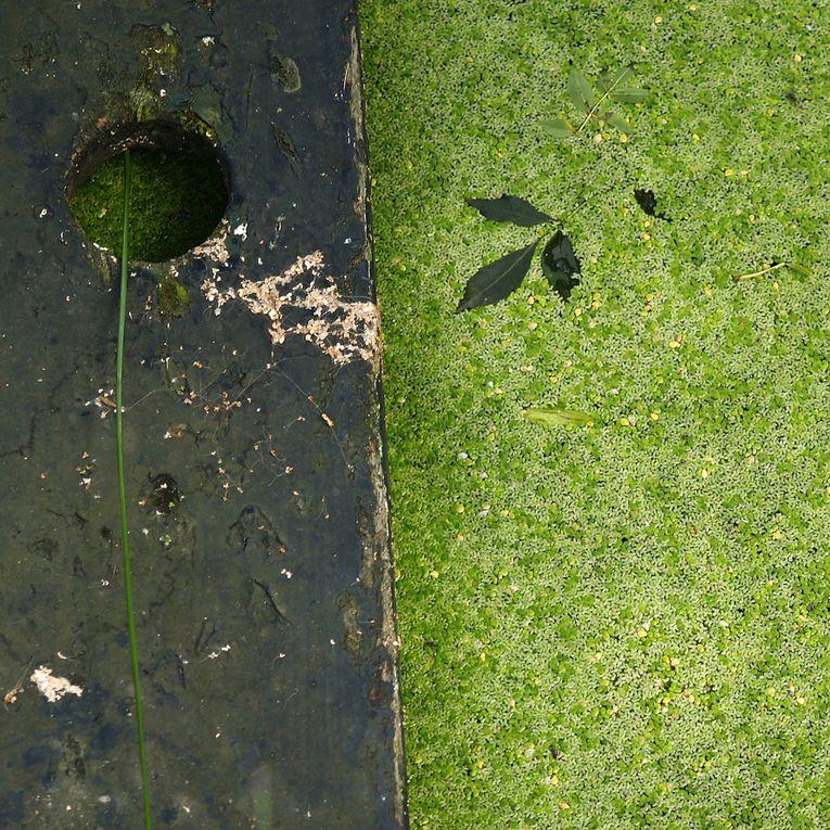 Les petits carrés Bretons - Photos Thierry Weber Photographe La Baule Guérande
