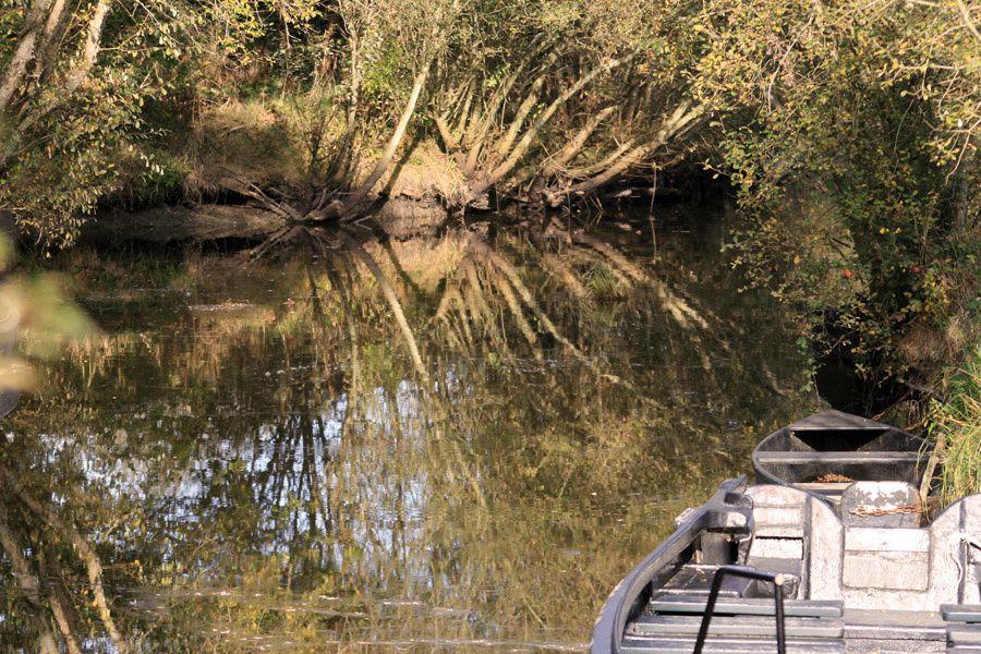 Photos du Parc Régional Naturel de Brière en Automne - Photos Thierry Weber Photographe de Mer - La Baule Guérande