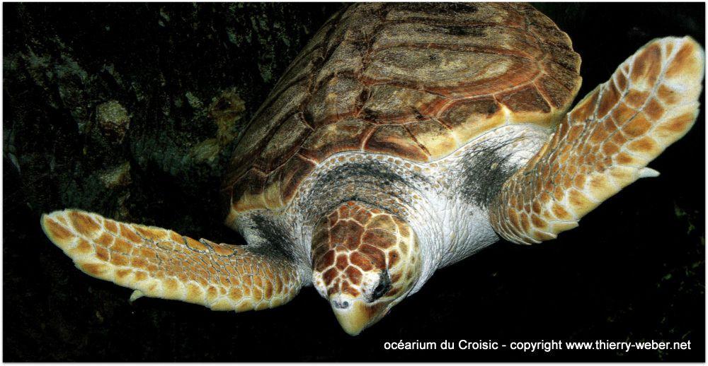 Une visite de l'oc&eacute&#x3B;arium du Croisic...<br />www.ocearium-croisic.fr