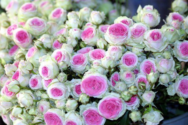 Je me souviens qu'il y a fort longtemps, dans une autre vie, j'ai &eacute&#x3B;t&eacute&#x3B; aussi un peu fleuriste...