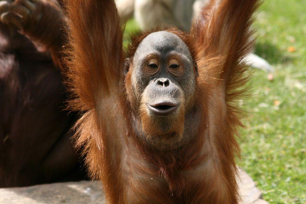 Les animaux du Zoo de la Boissiere du Dore