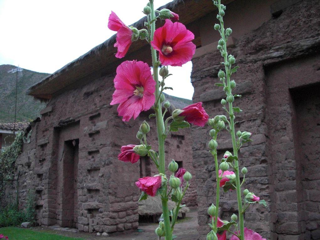 Tourisme solidaire au Pérou, un voyage inoubliable... Des rencontres, de la découverte, des paysages à couper le souffle.