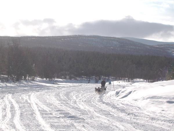 Les photos d'une course très conviviale en Laponie suedoise