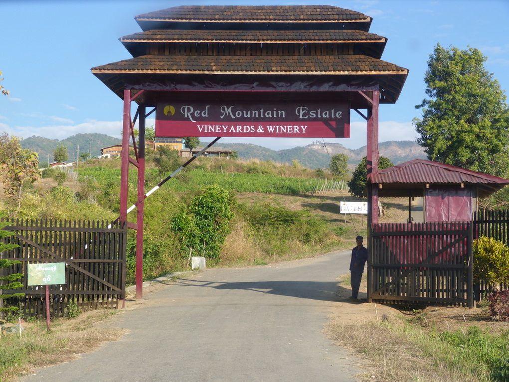 Album - Domaines-vinicoles-en-Birmanie-et-au-Cambodge