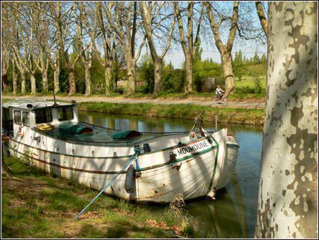 Le long du canal du Midi, les p&eacute&#x3B;niches offrent un festival de couleurs