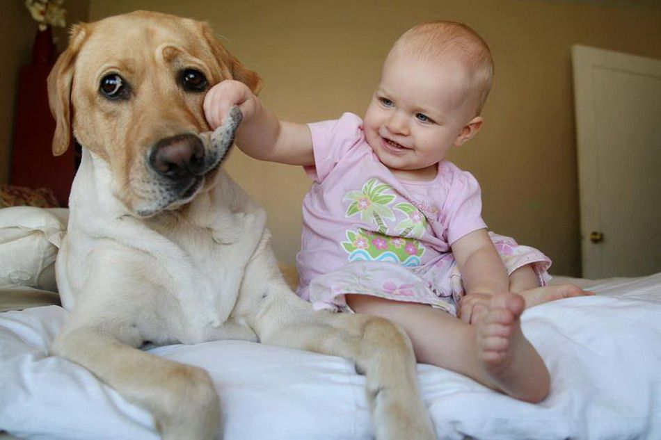 photo diaporama bébés mausants