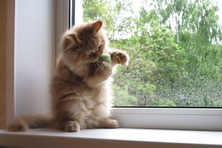 images de chats et chatons