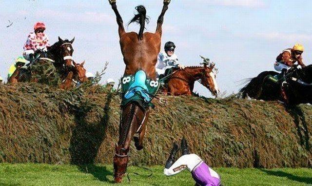 images de chevaux amusantes ou insolites
