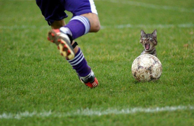 sport gag et insolite