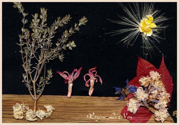 Album - Cartes postales              fleurs pressees