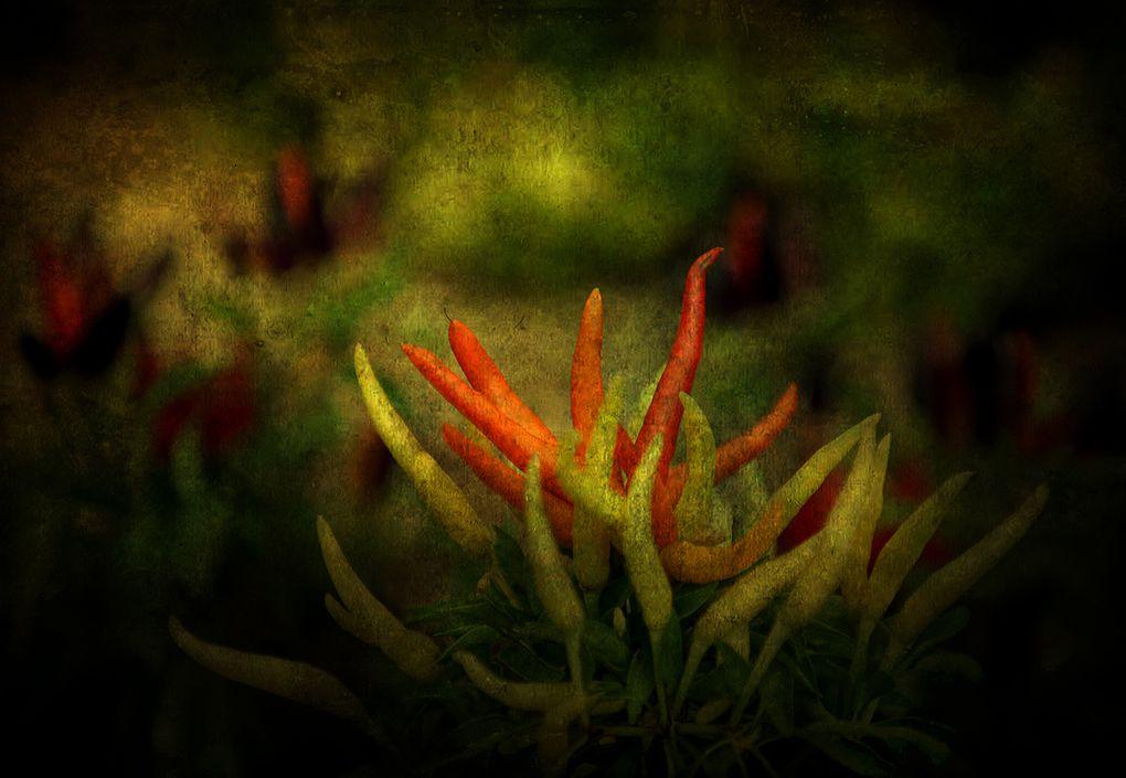 Album - Paysages-2