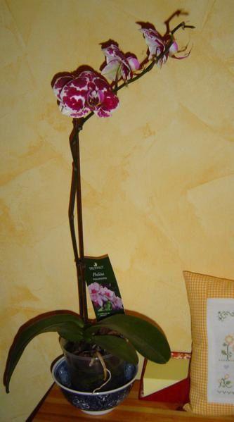 Album - mes orchidees