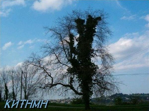 <p>&nbsp&#x3B;Es war einmal...</p><p>Il &eacute&#x3B;tait une fois, la colline en fleurs!</p><p>(et l'arbre mort a refleuri!)</p><p>&nbsp&#x3B;</p><p>&nbsp&#x3B;</p><p>&nbsp&#x3B;</p>