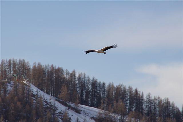"""Au petit matin,soleil levant nos demoiselles se sont affairées au lissage de leur voilure,étirement du cou...Et finalement une est partie se dégourdir les ailes et surtout rechercher la""""pompe""""qui lui fera prendre de l'altitude ..Elle trouva"""