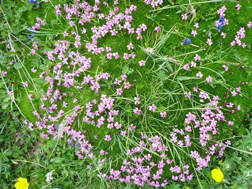 fleurs rencontrées pendant randonnées. Classées par mois de floraison - Nom de la plante - Endroit de rencontre