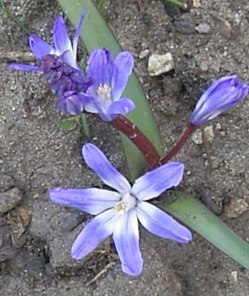<p>Fleurs de partout</p>