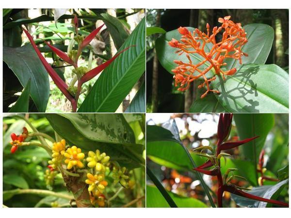 <p>L'album &quot&#x3B;paysages&quot&#x3B; de notre voyage sur l'&icirc&#x3B;le Big Island d'Hawaii du 7 au 14 mars 2007. Vous y trouverez nos plus beaux clich&eacute&#x3B;s de plages, fleurs, arbres, lave, montagnes, prairies, monuments et&nbsp&#x3B;sites historiques...</p>