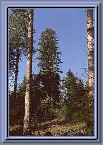 Album - la-nature