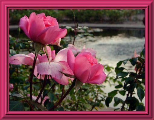 Album - Les Fleurs