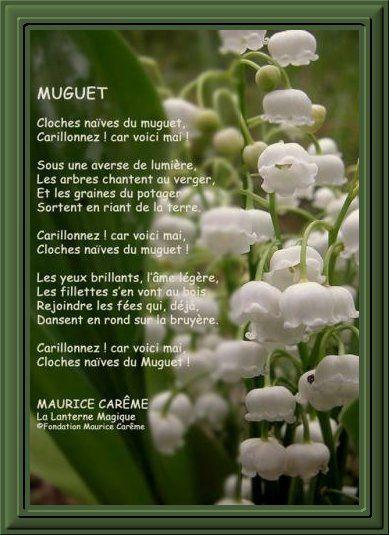 Album - Muguets