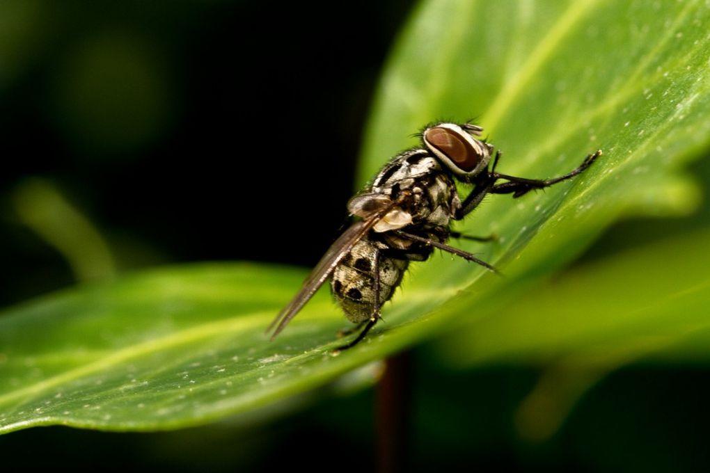 Le monde des insectes au travers mon regard