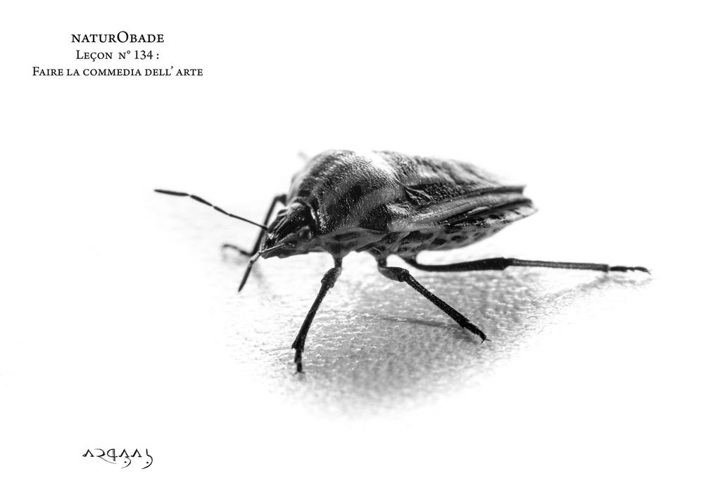 Leçons d'insectes