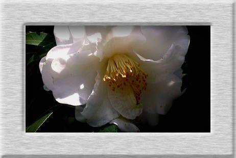 Divers aspects de la flore japonaise, qui est tr&egrave&#x3B;s riche et vari&eacute&#x3B;e&hellip&#x3B;