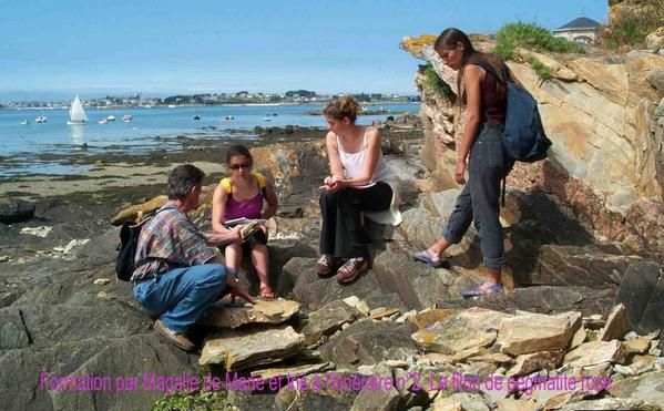 Quelques photos des animations naturalistes sur le site de Roscoff