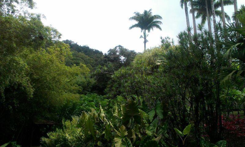 Album - Dominique et Martinique 2013