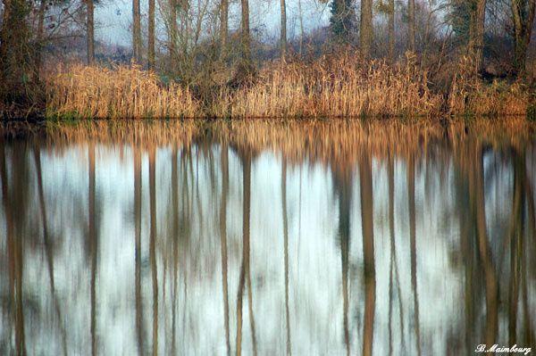 Vous trouverez, dans cet album, une série de photos prises aux étangs de Bailleul-sur-Thérain (Oise)et Montreuil-sur-Thérain entre janvier 2006 et 2008.