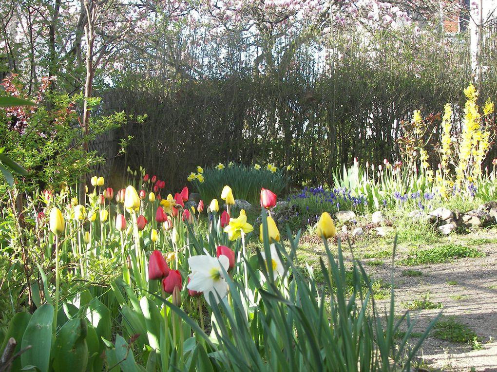 Album - mon jardin de curé