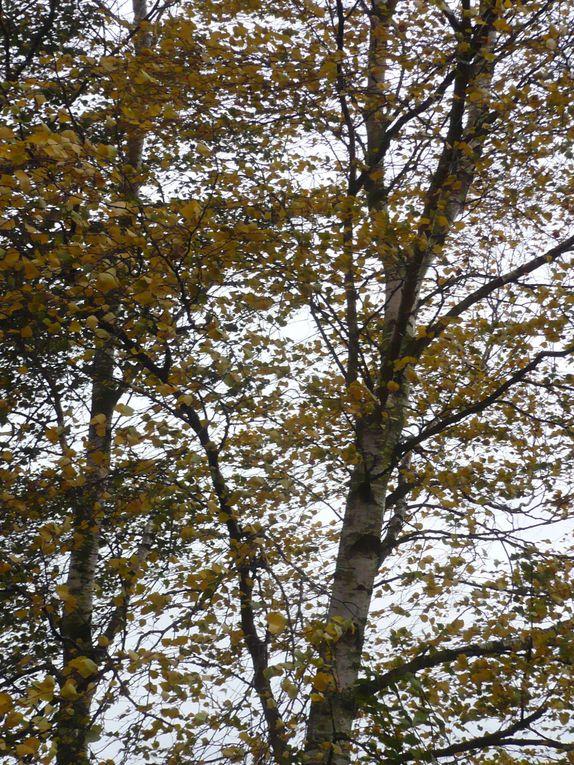 Album - Sorties-Nature