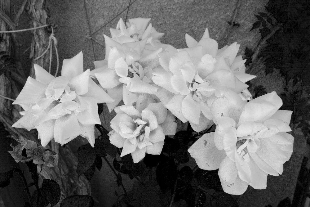 Ambiance Provençale - Photos Noir et Blanc de Thierry Weber - Photographe La Baule Guérande