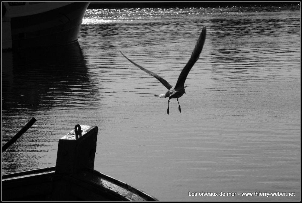 Album - Les oiseaux de mer