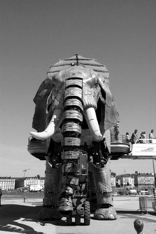 Album - Nantes Les machines de l'Ile