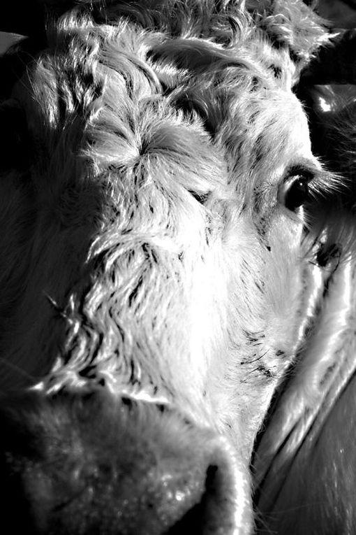 Album - Monde animal