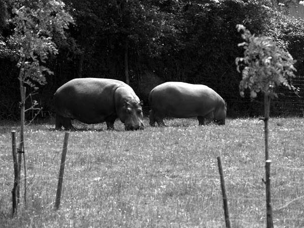 """<font size=""""3"""">Plan&egrave&#x3B;te Sauvage - Parc Animalier de Loisirs<br />Situ&eacute&#x3B; entre Nantes et Pornic (Loire-Atlantique)</font>"""