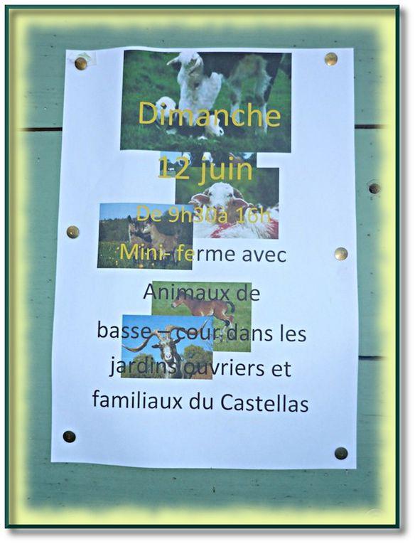 Album - Potins-du-jardin