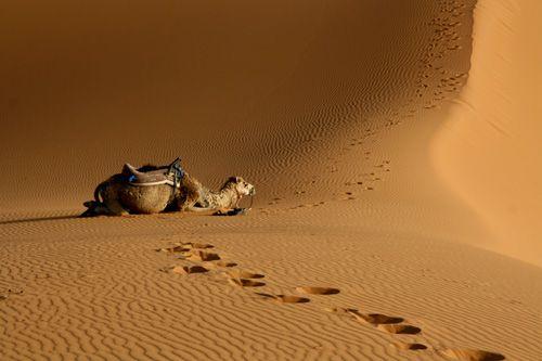 Juin 2008 bivouac d'une nuit dans l'Erg Chebbi le desert du Sud Marocain